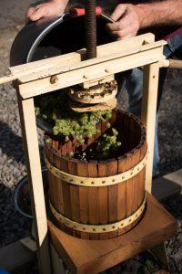 Weinlesetag im Weingut 16. Oktober 2019