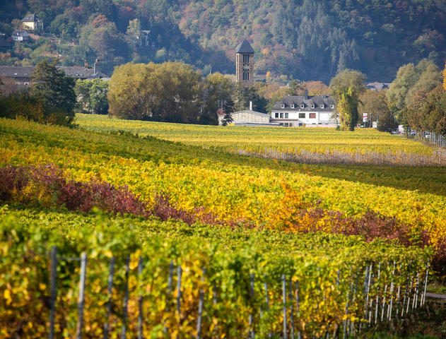 Zum Kloster Ebernach gehört ein traditionsreiches Weingut. Doch jetzt müssen sich die Franziskanerbrüder einen neuen Pächter suchen. Foto: Kevin Rühle