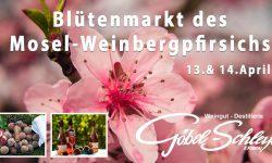 Weinbergpfirsich-Blütenfest